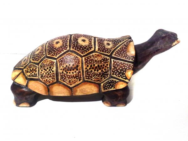 Teknős 30